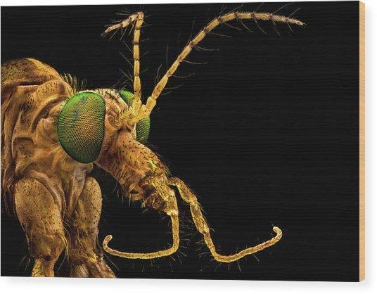 Green Eyed Crane Fly Wood Print