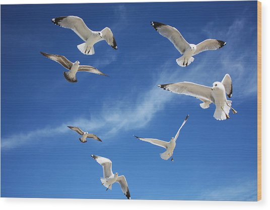 Heavenly Seagulls Wood Print
