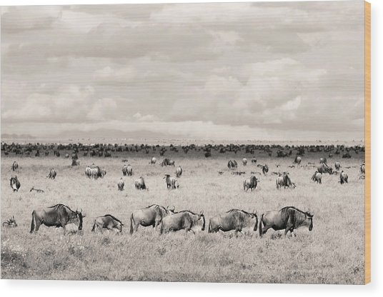 Herd Of Wildebeestes Wood Print
