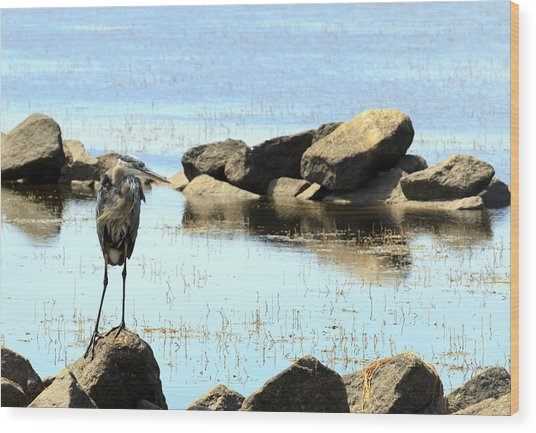 Heron On The Rocks Wood Print