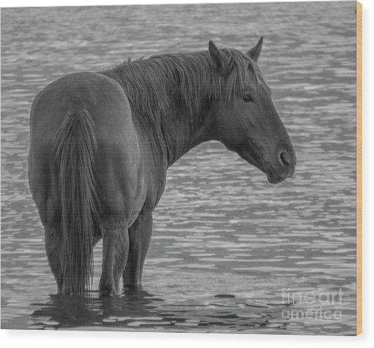 Horse 10 Wood Print
