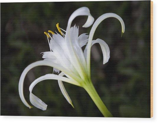 Hymenocallis Narcissiflora Wood Print