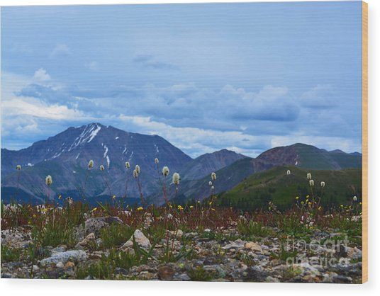 Wood Print featuring the photograph Independence Pass by Kate Avery