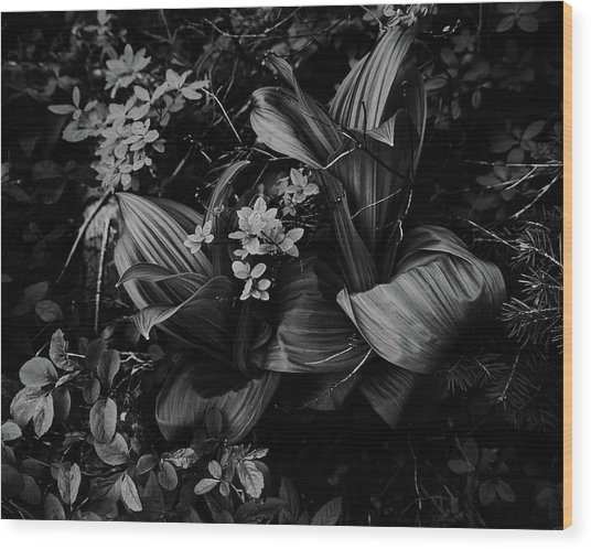 Wood Print featuring the photograph Indian Hellebore 3 by Trever Miller