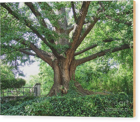 Inwood Ginkgo  Wood Print