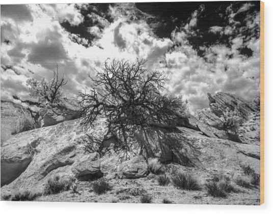 90270 Escalante Tree On Rock Wood Print