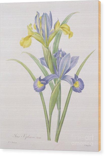 Iris Xiphium Wood Print