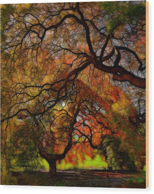 Japanese Maples 2 Wood Print