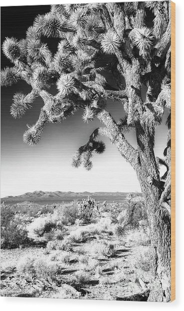 Joshua Tree At Mojave National Preserve In Black And White Wood Print