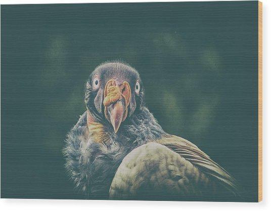 King Vulture Wood Print