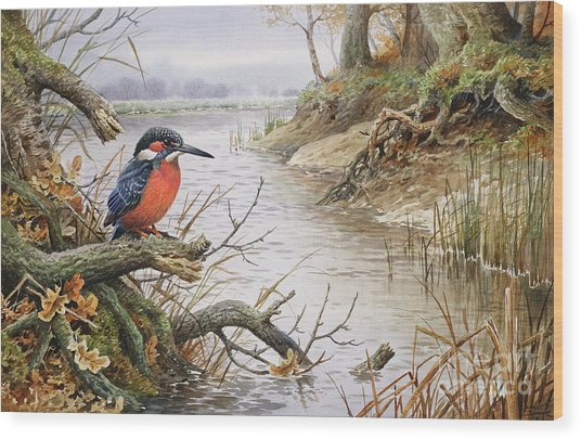 Kingfisher Wood Print