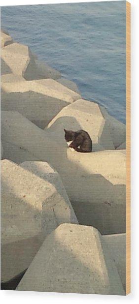 Koneko Means A Kitten. Wood Print