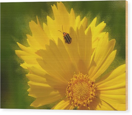 Lady Bug Lookout Wood Print by Paul Anderson