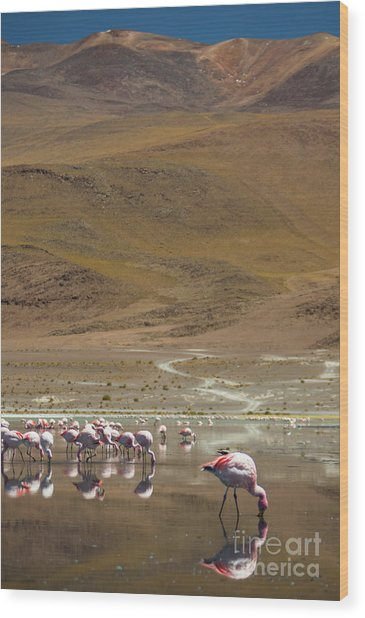Laguna Colorada, Andes, Bolivia Wood Print