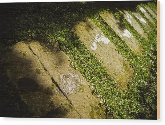 Light Footsteps In The Garden Wood Print