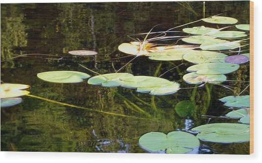 Lily Pads On The Lake Wood Print