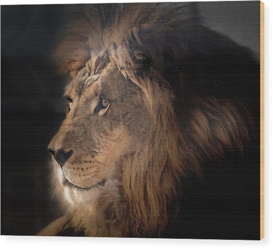 Lion King Of The Jungle Wood Print