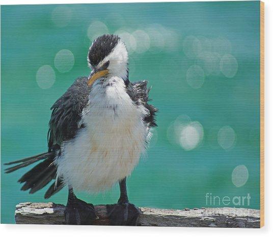 Little Pied Cormorant I Wood Print