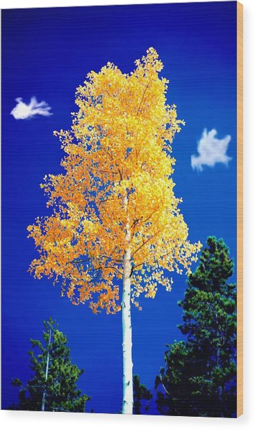 Lone Golden Aspen Wood Print