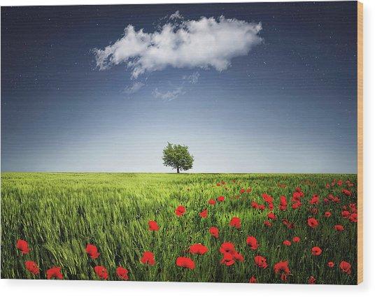 Lone Tree A Poppies Field Wood Print