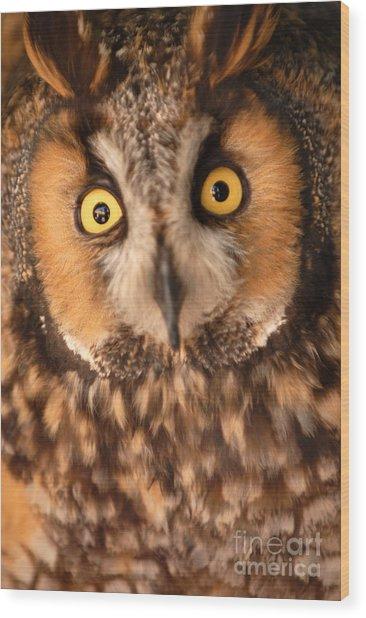 Long Eared Owl Wood Print by Dennis Hammer