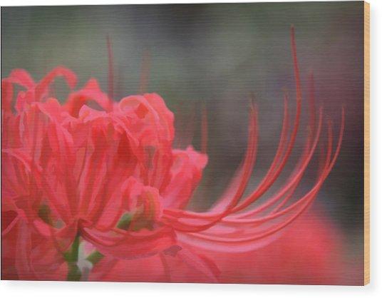 Lycoris Radiata Wood Print
