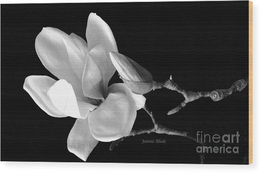 Magnolia In Monochrome Wood Print