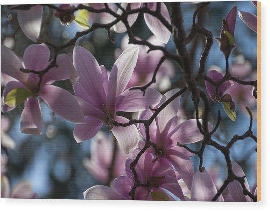 Magnolia Net - Wood Print