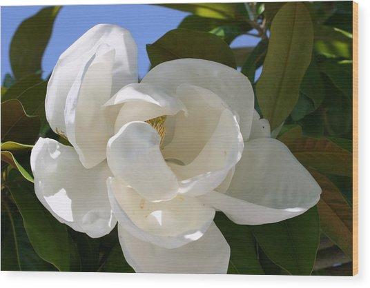Magnolia Wood Print by Ofelia  Arreola