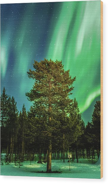 Majestic Tree Under The Northern Lights Karasjok Norway Wood Print