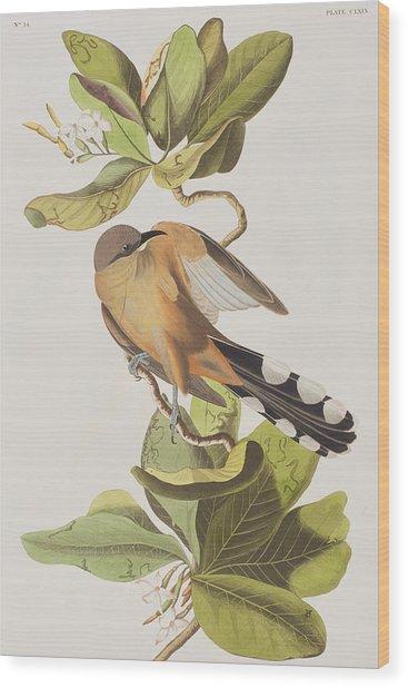 Mangrove Cuckoo Wood Print