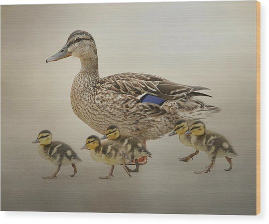 March Of The Ducklings Wood Print