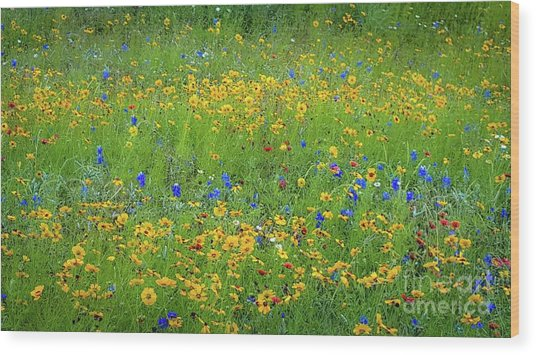 Mixed Wildflowers In Texas 538 Wood Print