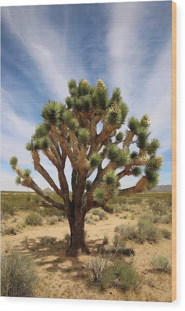 Mojave Sentinel Wood Print by Robin Street-Morris