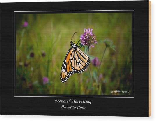 Monarch Harvesting Wood Print by Mathias Rousseau