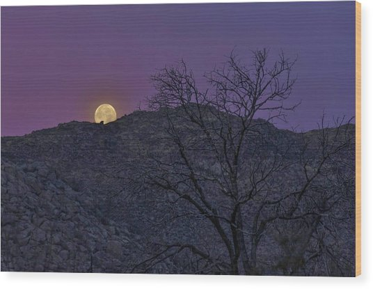Moon Set At Sunrise Wood Print