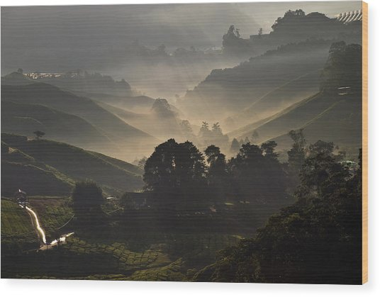 Morning At Cameron Highlands Wood Print