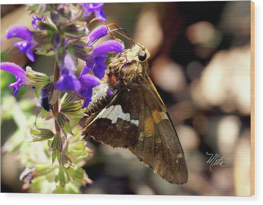 Moth On Purple Flower Wood Print