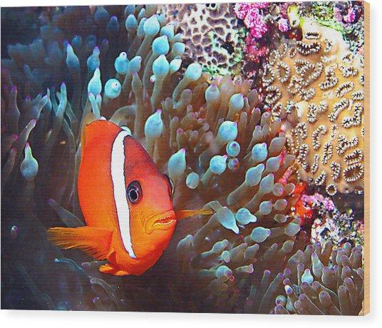 Nemo Wood Print