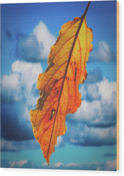 October Leaf B Fine Art Wood Print