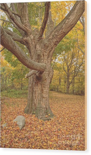 Odiorne Point State Park - Rye New Hampshire Wood Print