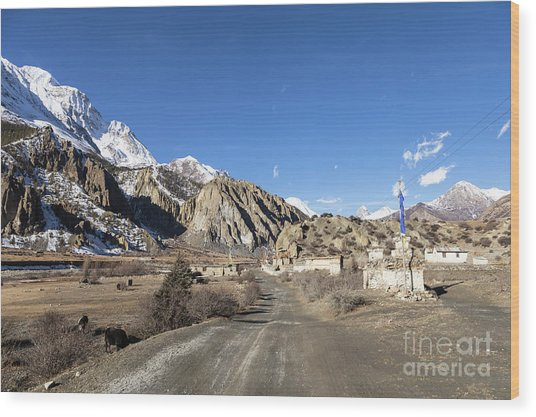 On The Annapurna Circuit Trekking Near Manang In Nepal Wood Print