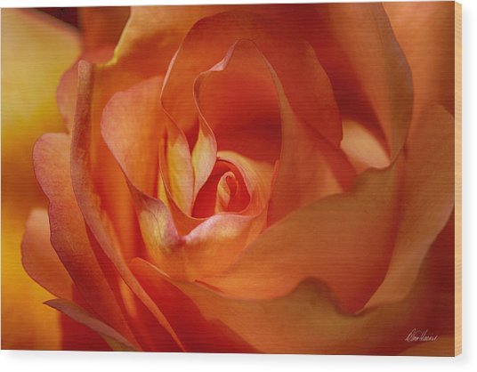 Orange Passion Wood Print