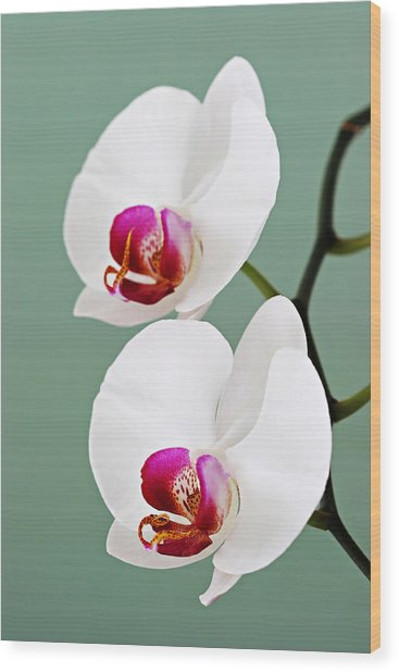 Orchid-2-st Lucia Wood Print