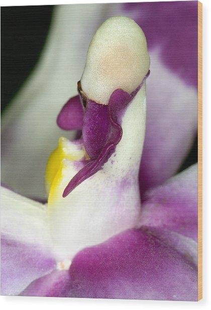 Orchid Flower Bloom Wood Print