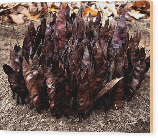 Organize Brown Pods Wood Print by Lizzie  Johnson