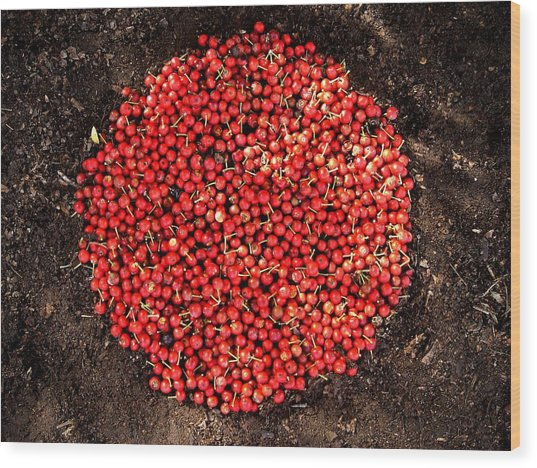 Organize Red Berries Wood Print by Lizzie  Johnson