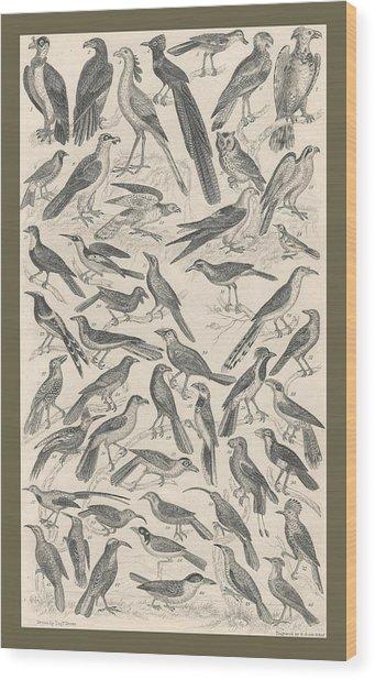 Ornithology Wood Print