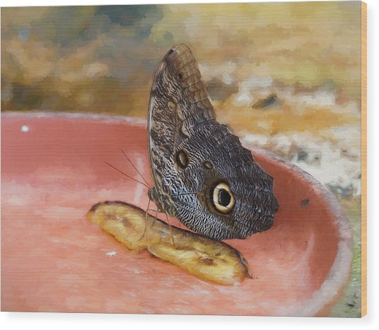 Wood Print featuring the photograph Owl Butterfly 2 by Paul Gulliver