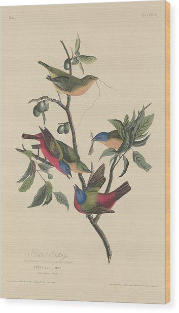Painted Bunting Wood Print